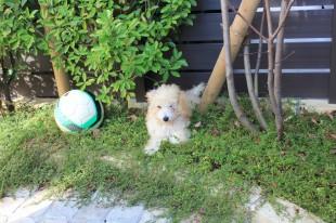 愛犬向けの庭