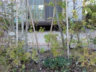 樹木に囲まれたくつろぎ空間3