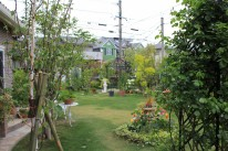 雑木風の庭