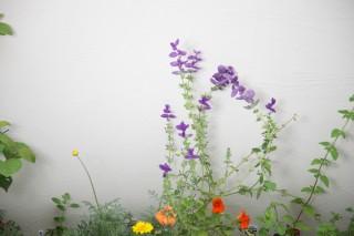 白い壁に草花