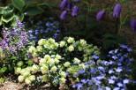 綺麗に咲き誇る草花