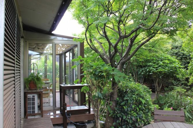 雑木林の中のハピーナ