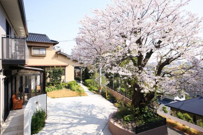 ガーデンルーム&桜