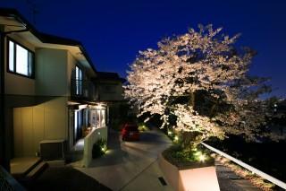 ガーデンルームと夜桜